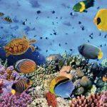 barcares-aquarium-banyuls