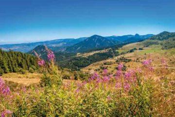 paysage de montagne été