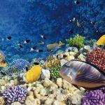 espagne-barcelone-aquarium