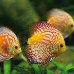 la-tranche-aquarium