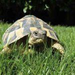 perpignan-vallee-tortues