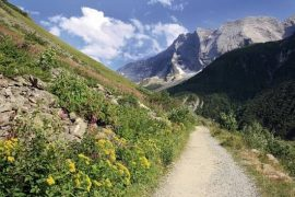 areches