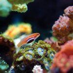 cap-d-agde-aquarium