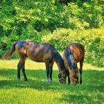 ferme-equitation