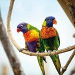 sardaigne-parco-degli-ucceli