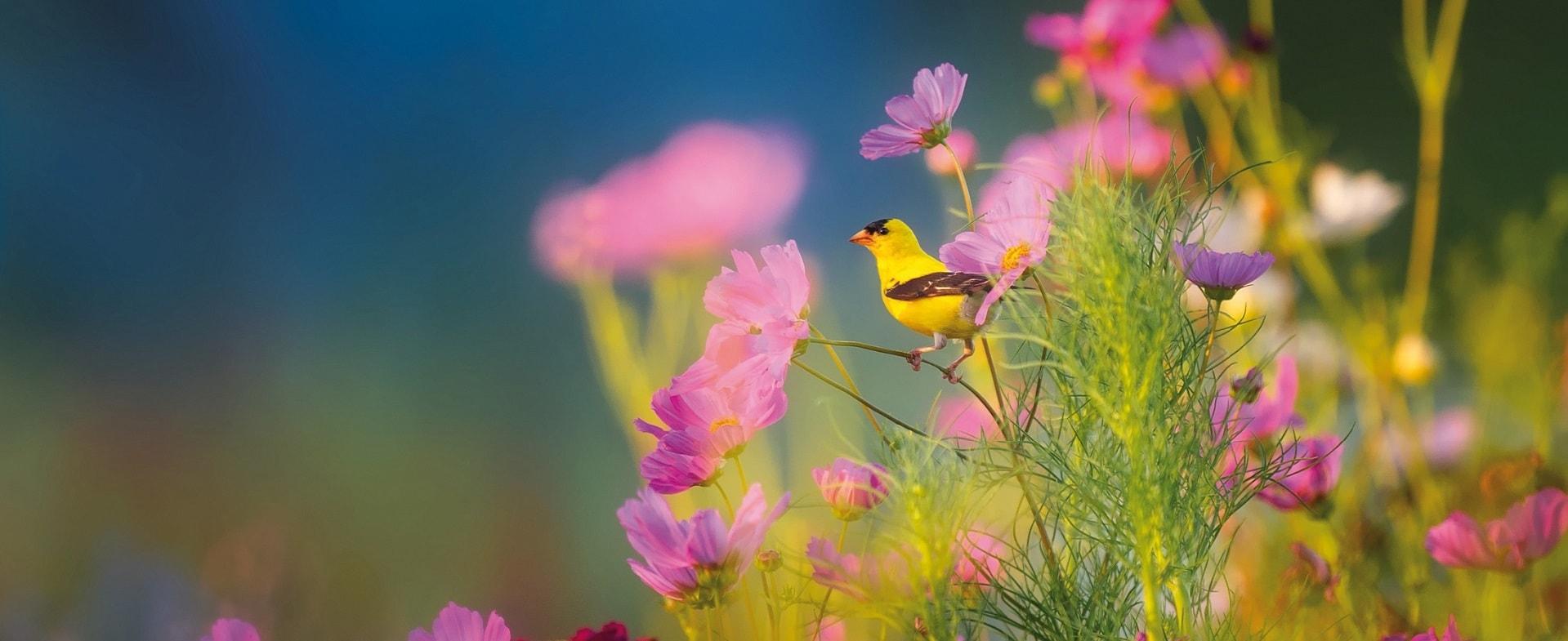 oiseau sur une fleur