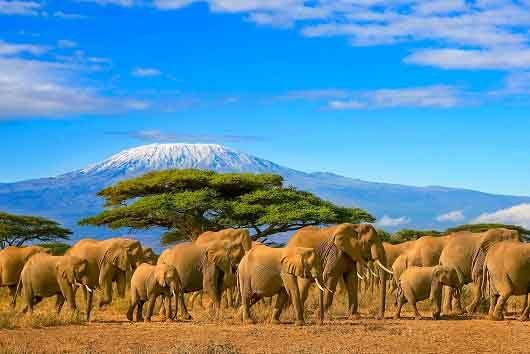Kilimanjaro et troupeau d'éléphants