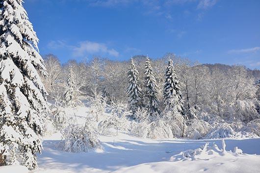 les Vosges enneigées