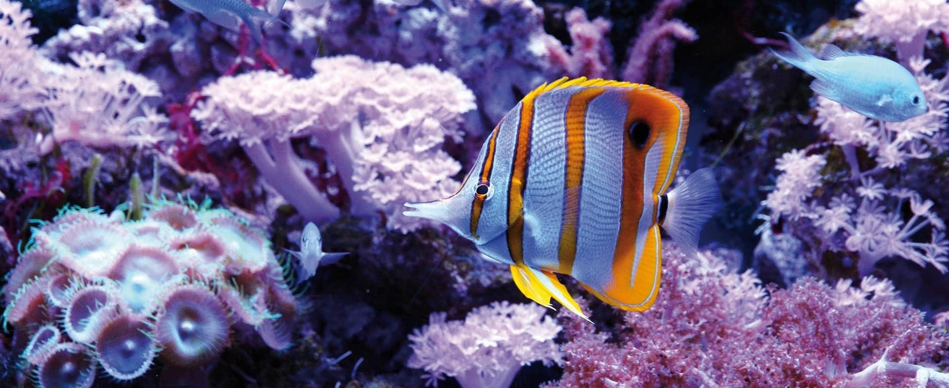 poisson dans aquarium